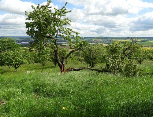 Beweidungsflächen von (ehemals) verbuschten Grundstücken zur Entwicklung von Extensivgrünland