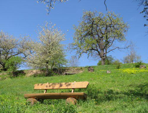 Förderprogramm Blühflächen und Biodiversitätspfade des MLR