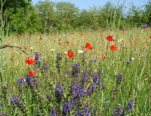 Offenland-Biotopkartierung im Rhein-Neckar-Kreis